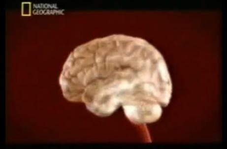 (Español) El cerebro de los músicos